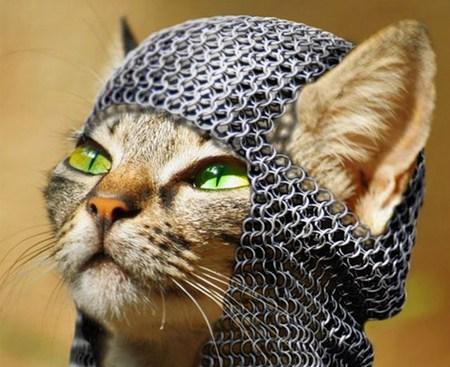 Medieval Cat